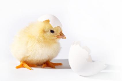 Kokska i jaje