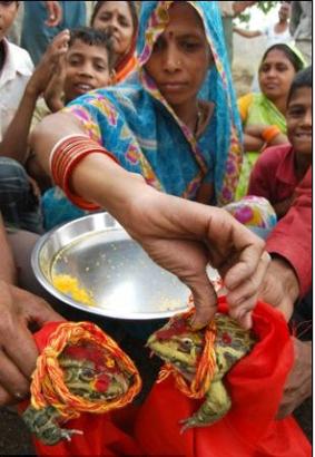 صور: عقد قران ضفدع وضفدعة لمحاولة إنزال المطر على قرية بالهند